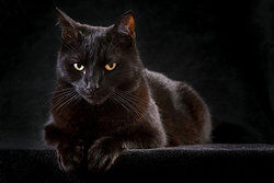 A black cat as examples of ignorance