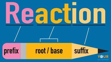 diagram word reaction prefix, root/base, suffix