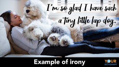 irony example lap dog