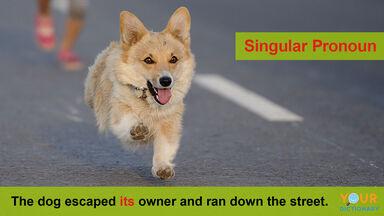 singular pronouns example with sentence