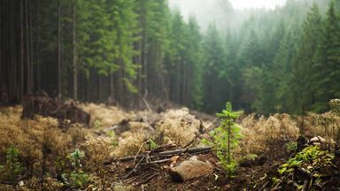 tree sapling in forest as example of secondary succession