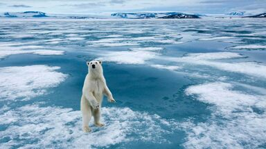 polar bear standing on ice in Norway