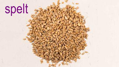 pile of spelt grains