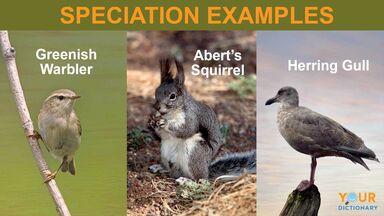 speciation examples of birds and squirrel