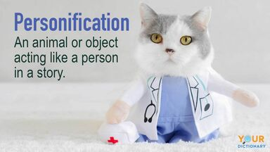 literary terms example of personification with cat