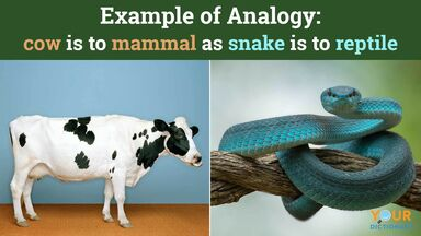 example of analogy cow mammal snake reptile