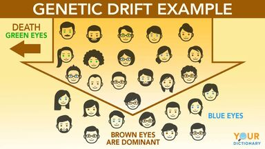 genetic drift example
