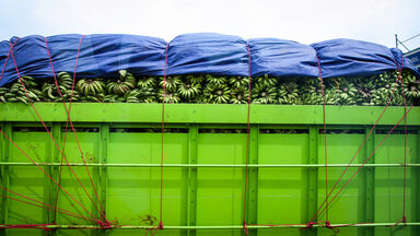 bananas in transit in green container