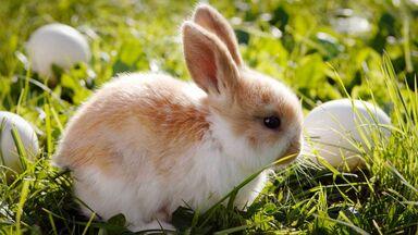 bunny rabbit symbol fertility