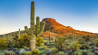 desert plant adaptions