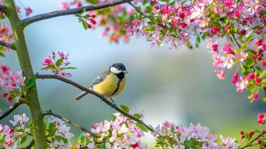 spring blossoms and bird on branch