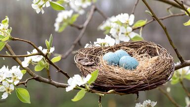 spring bird's nest with robin eggs
