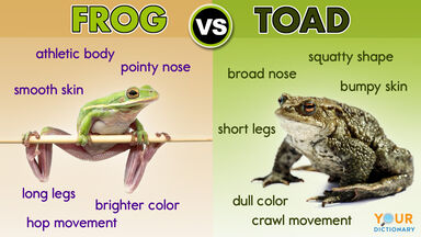 difference between frog and toad with examples
