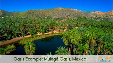 oasis example of Mulegé Oasis, Mexico