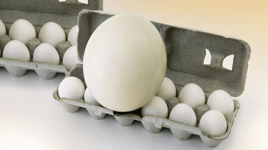 food fact ostrich egg vs chicken eggs
