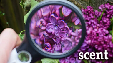scent pronounce correctly flowers magnifying glass