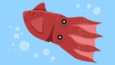 vampire squid under water illustration