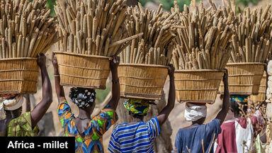 Dogon women carrying millet Mali