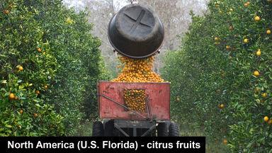 North America Florida citrus fruits oranges