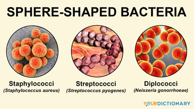 examples of bacteria that are sphere-shaped