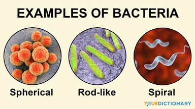 examples of bacteria in different shapes