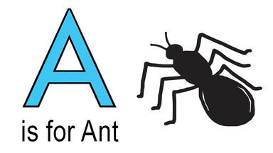 a words for kids example of ant