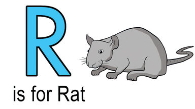 R words for kids example of rat