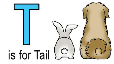 t words for kids example of tail