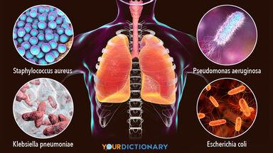 bacteria types that cause nosocomial pneumonia