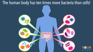 facts about bacteria in the human body