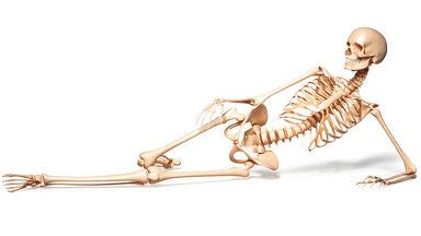 weird body facts human skeleton