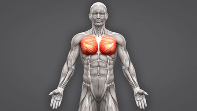 skeletal muscles function characteristics