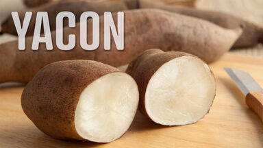 y food different culture Yacon roots