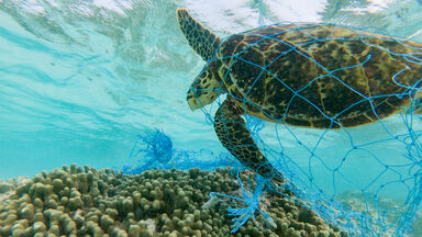 water pollution green sea turtle entangled in discarded fishing net