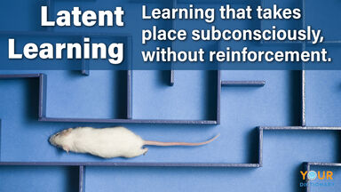 latent learning definition mouse in maze